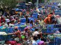 নওগাঁয়ে আমের 'বিপ্লব',  ৮০০ কোটি টাকার কেনাবেচার সম্ভাবনা