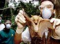 গবেষণা: 'করোনার মতো মহামারি আরো আসবে'