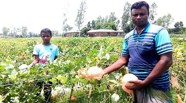 নওগাঁয় মধ্যপ্রাচ্যের ফল 'সাম্মাম'